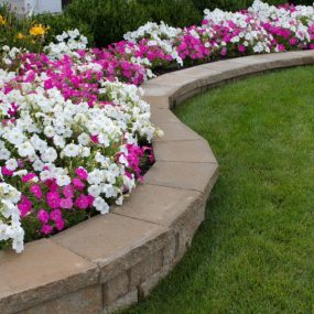 Pink and White Petunia Flower Bed with Rock Retaining Wall 285x285 Outdoor Summer Decor: Beautifying Your Space