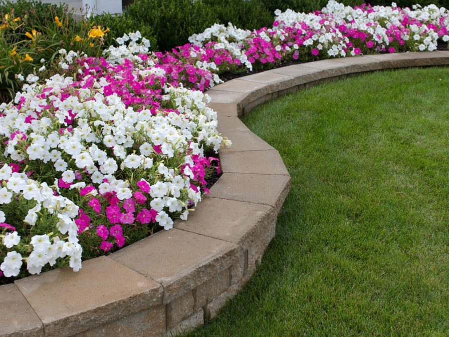 Pink and White Petunia Flower Bed with Rock Retaining Wall