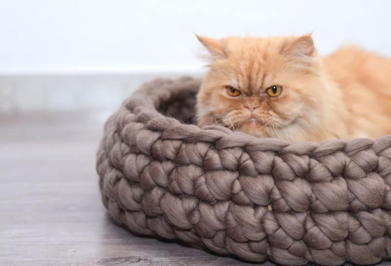 Cat Bed by bloisem