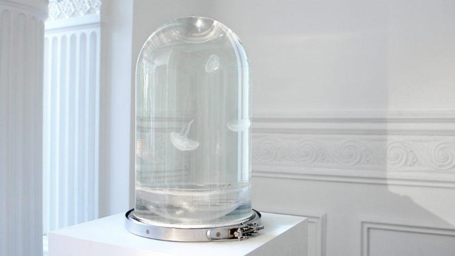 Darwin Jellyfish Tank