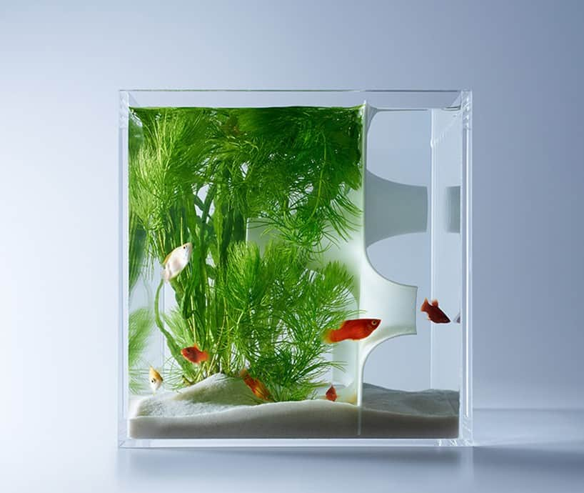 20 most unusual fish tank designs for office and home rh trendir com fish aquarium designs for home fish aquarium designs pakistan