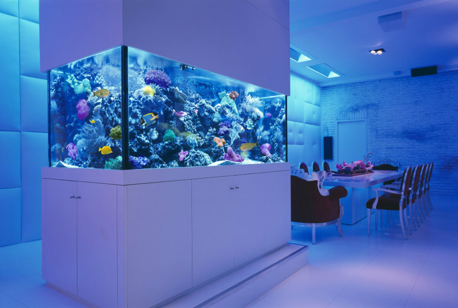 High Quality View In Gallery Reef Saltwater Aquarium By Okeanos Group