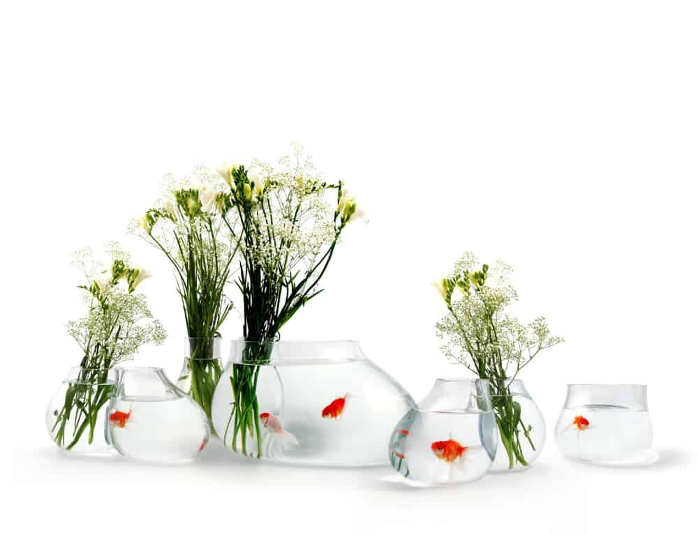 Salviati fish tank