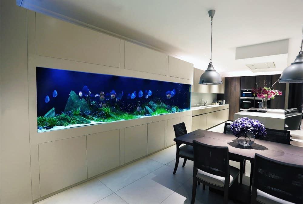 Serene Modern Interior Housing Discus Fish Fulham London