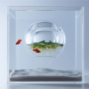 Sculptural Fish Tank Designs By Haruka Misawa
