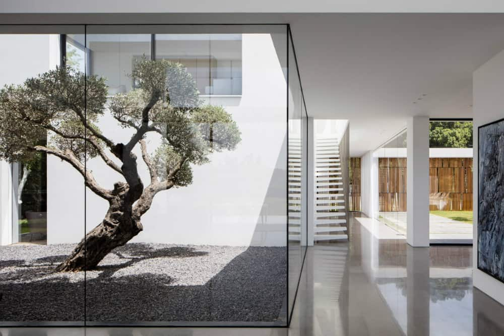 A beautiful tree gets its own display in a form of a fully glazed corner