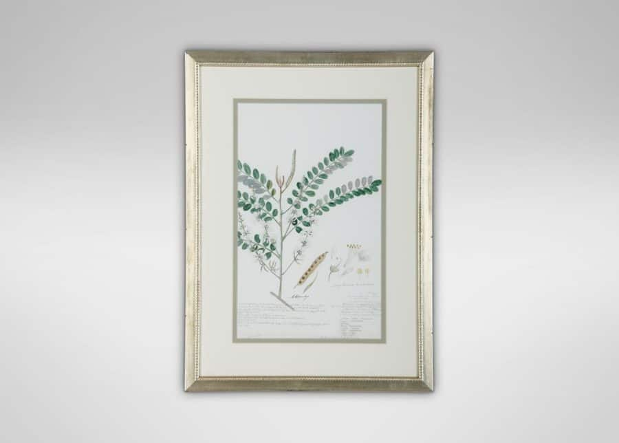 Plant framed art