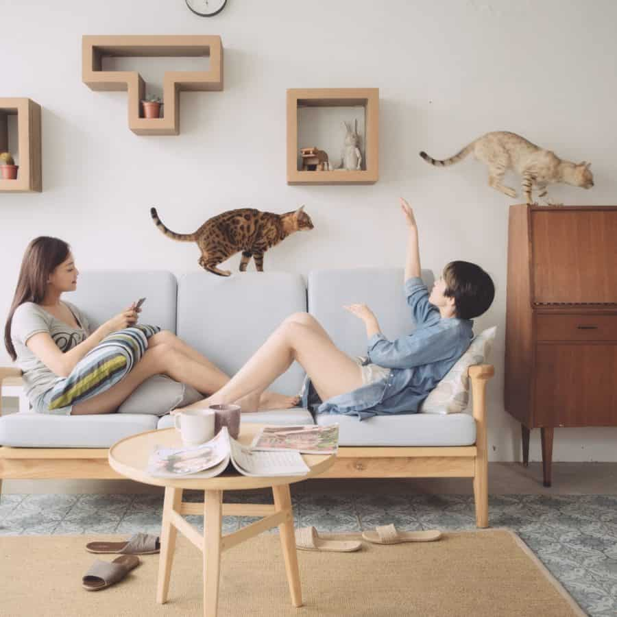 Wall KATRIS for Cats