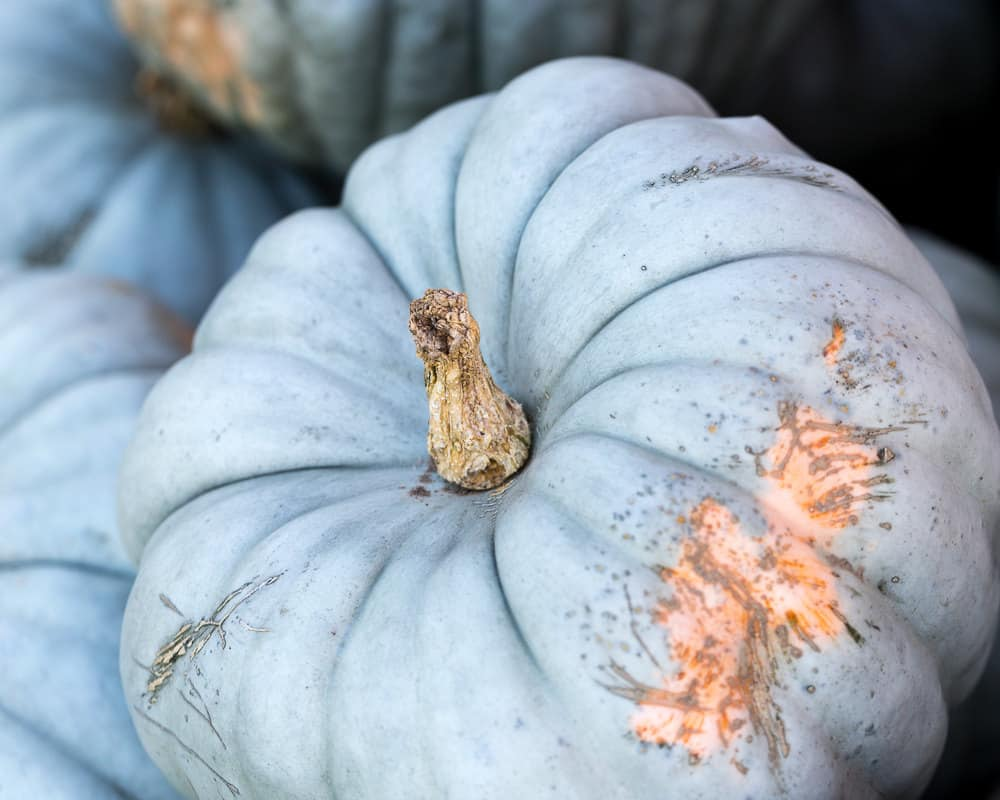 Matte blue pumpkins are all the rage this season especially as centerpieces for your fall decor tables.