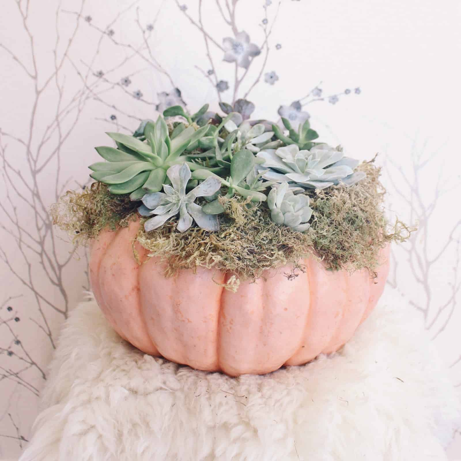 succulent halloween 10 Decorating Ideas For A Stunning Halloween Table