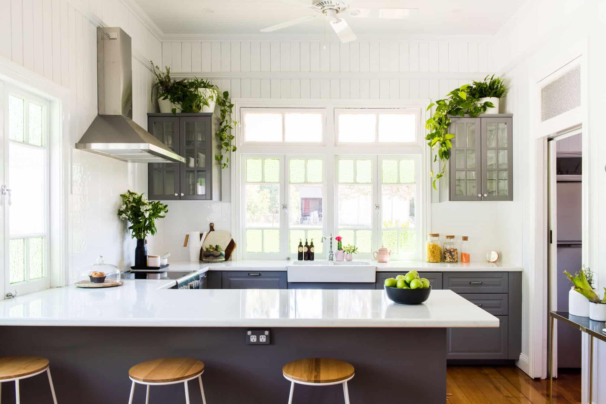 plants on countertops