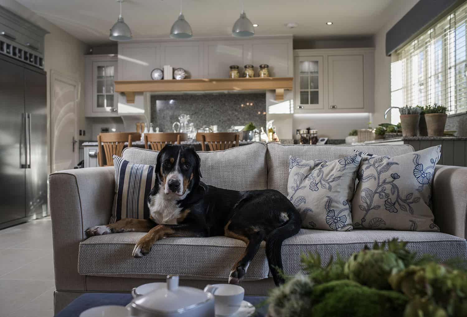 pet friendly living room Tips and Tricks For The Perfect Pet Friendly Interior Design