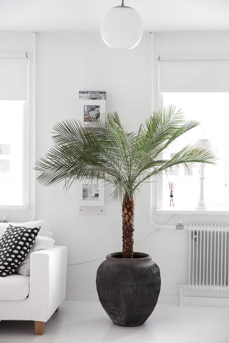 palm tree in home
