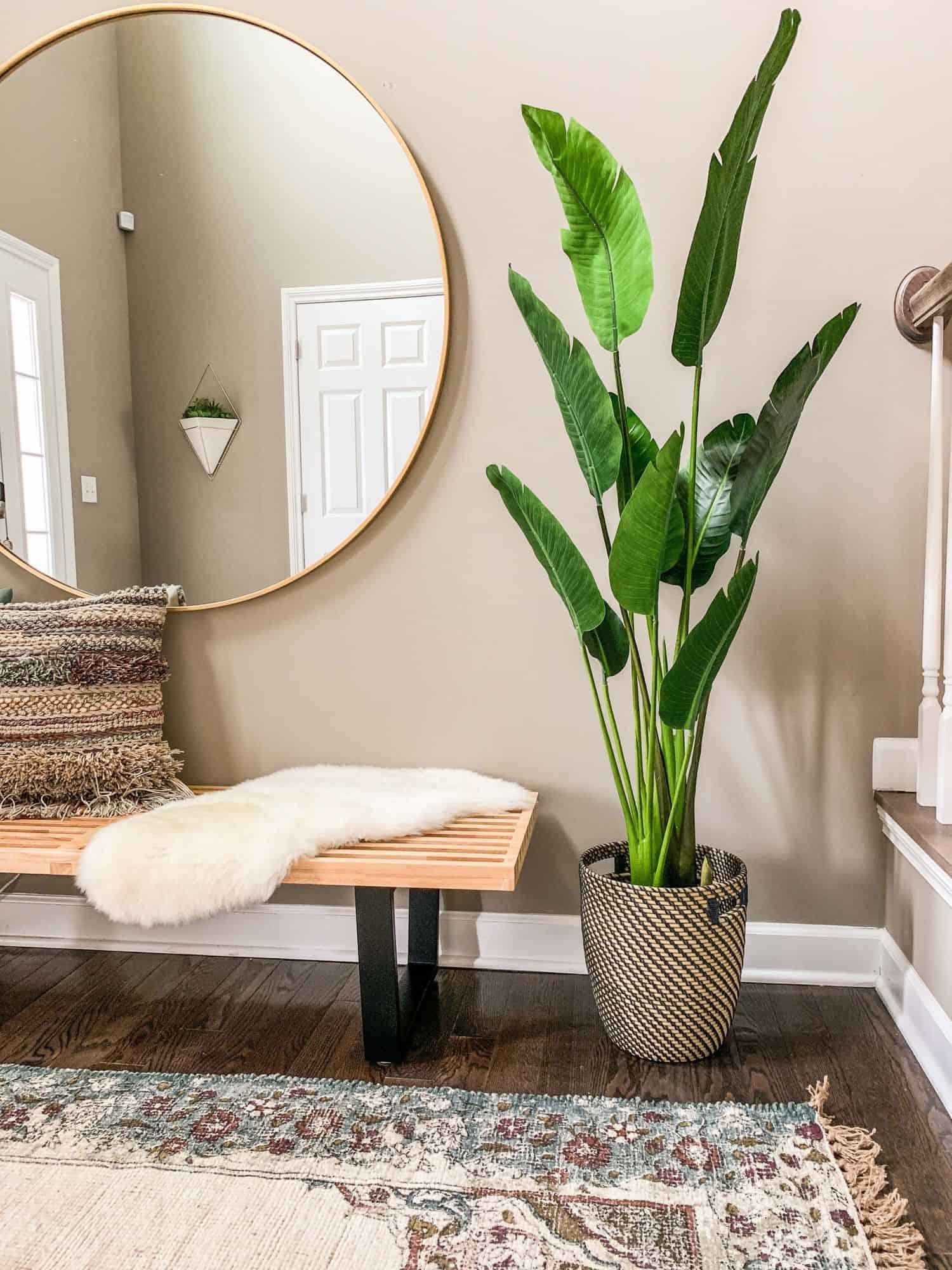 plant in entryway