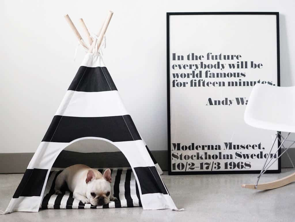 chic dog beds