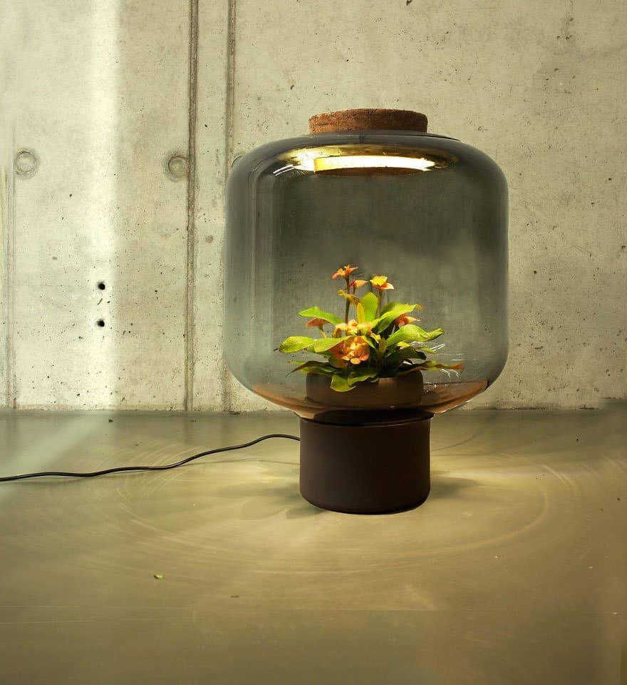 Self Contained Ecosystems Amazing Light Fixtures With Live Plants Inside