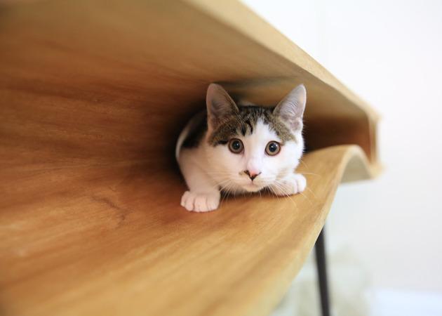 catable purr fect combination desk cat hangout 2 thumb 630xauto 40357 CATable is a Purr fect Combination of Desk & Cat Hangout