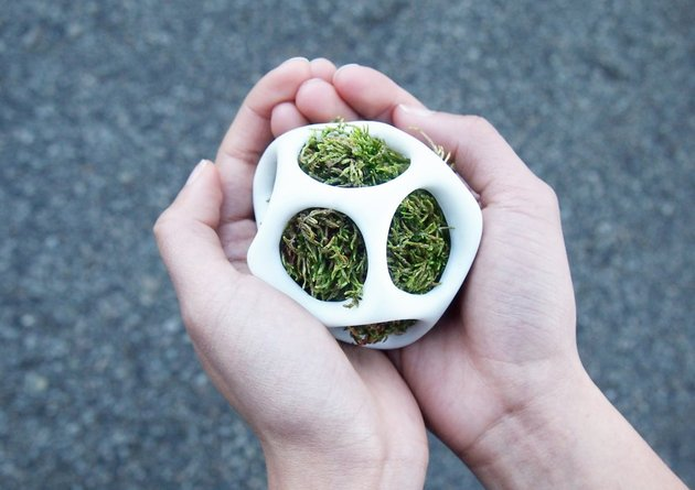 modular-moss-planter-kickstarter-project-cella-by-ecoid-6.jpg