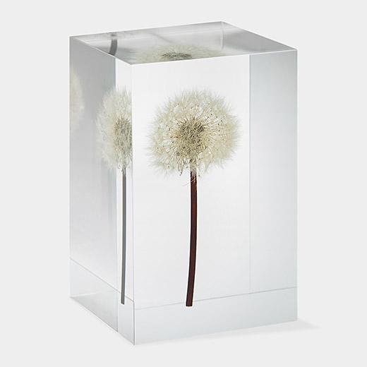 107251 A2 Dandelion Objet DArt thumb 630x630 56955 Dandelion Decor: Home Decorating Trend Grows