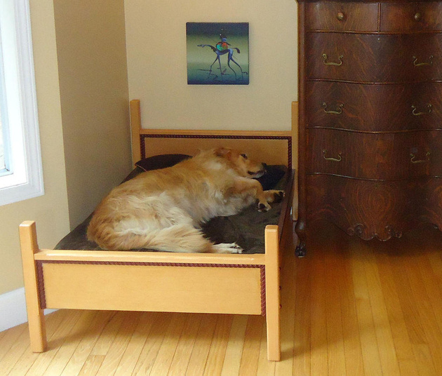 11-dog-beds-you-your-dog-love.jpg