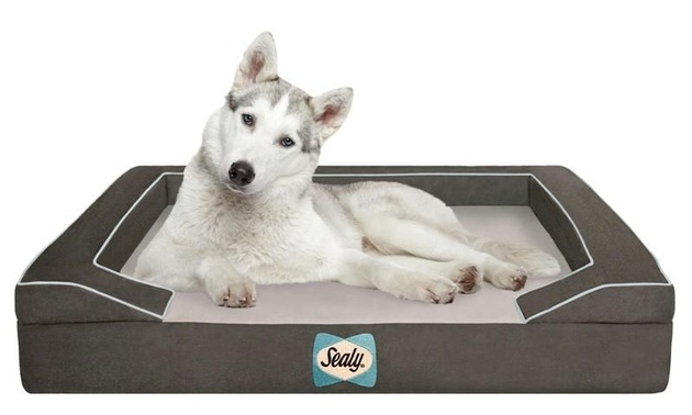 22-dog-beds-you-your-dog-love.jpg
