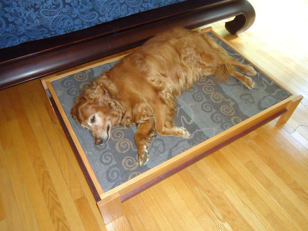 9-dog-beds-you-your-dog-love.jpg