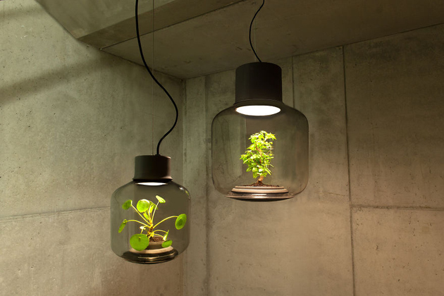 plant lamps with natural light awesome 1 thumb 630xauto 66649 Self Contained EcoSystems: Amazing Light Fixtures with Live Plants Inside