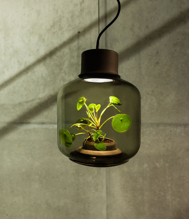 plant lamps with natural light awesome 2 thumb autox727 66651 Self Contained EcoSystems: Amazing Light Fixtures with Live Plants Inside