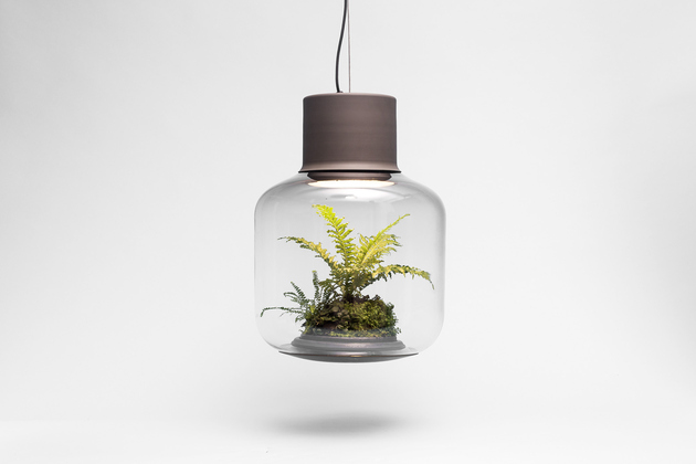 plant-lamps-with-natural-light-awesome-8.jpg