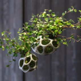 Modular Moss Planters: Cella by Ecoid on KickStarter