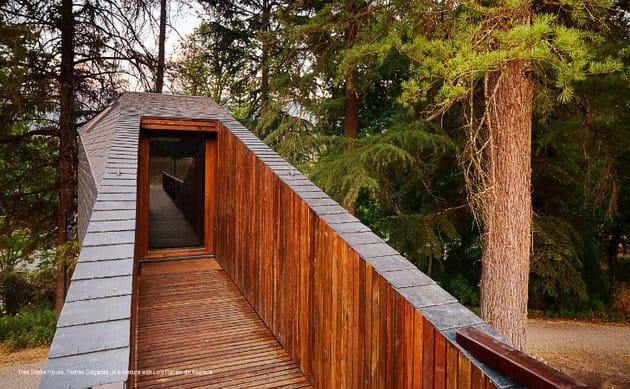 spectacular-tree-snake-houses-6.jpg
