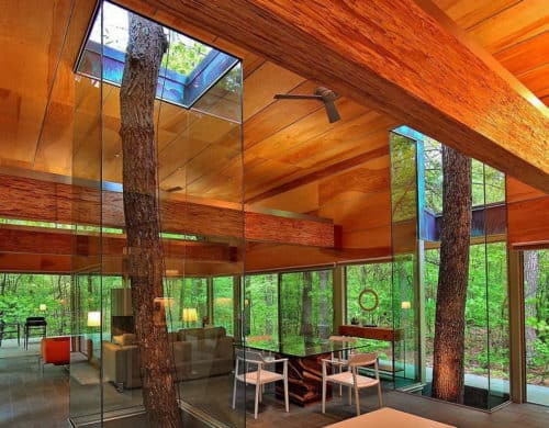 Trees Encased in Glass Continue to Grow through House