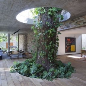 Homes Built Around Trees: 13 Creative Examples