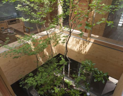 Urban Home with Two Story Inner Tree Garden