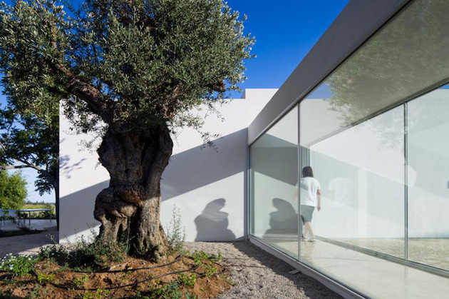 minimalist-white-house-with-glass-walkway-in-olive-grove-6.jpg