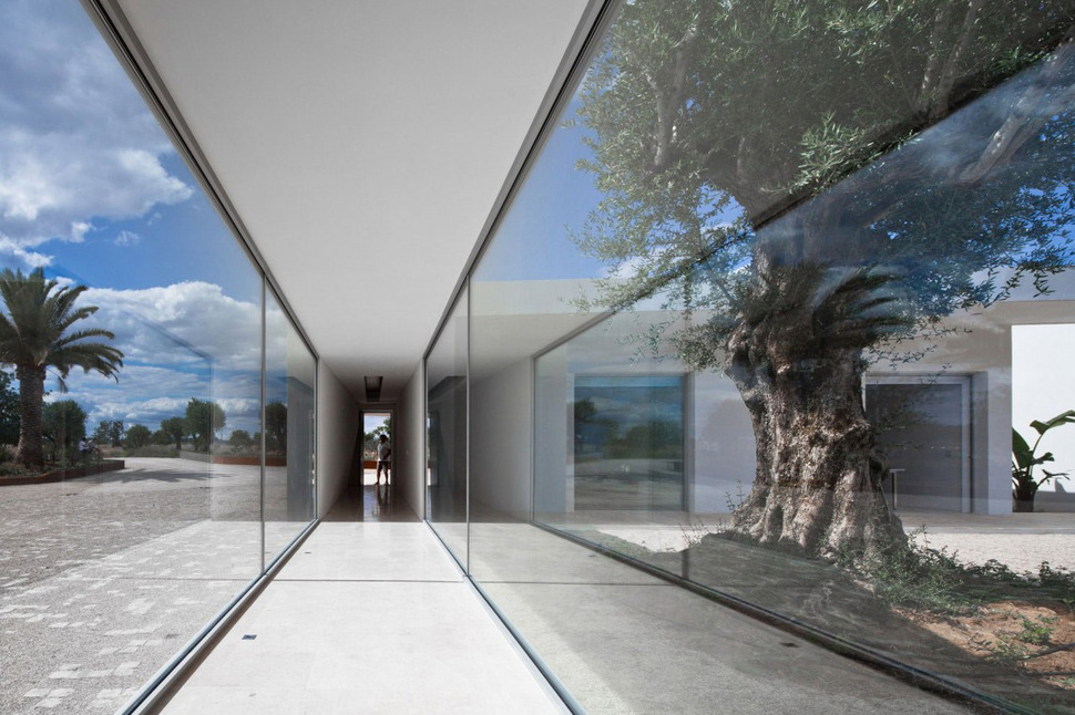 Minimalist White House With Glass Walkway In Olive Grove