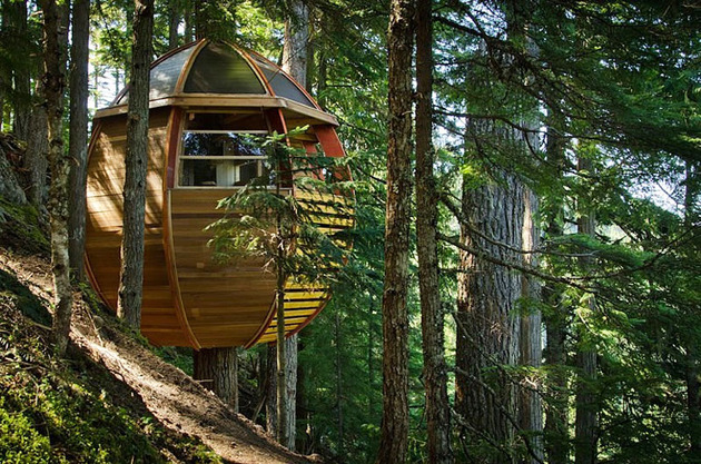 suspended-wooden-pod-cabin-built-around-tree-trunk-10-slope.jpg
