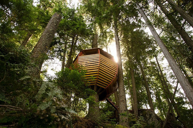 suspended-wooden-pod-cabin-built-around-tree-trunk-12-below.jpg