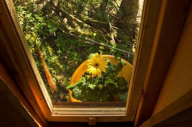 suspended-wooden-pod-cabin-built-around-tree-trunk-17-ground-window.jpg