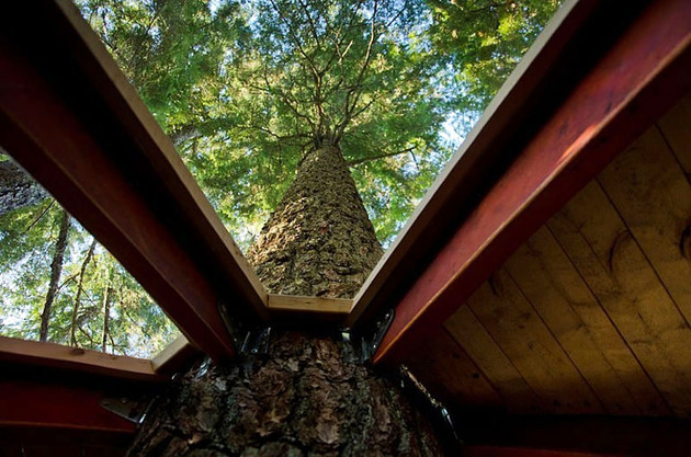 suspended-wooden-pod-cabin-built-around-tree-trunk-18-view-up-trunk.jpg