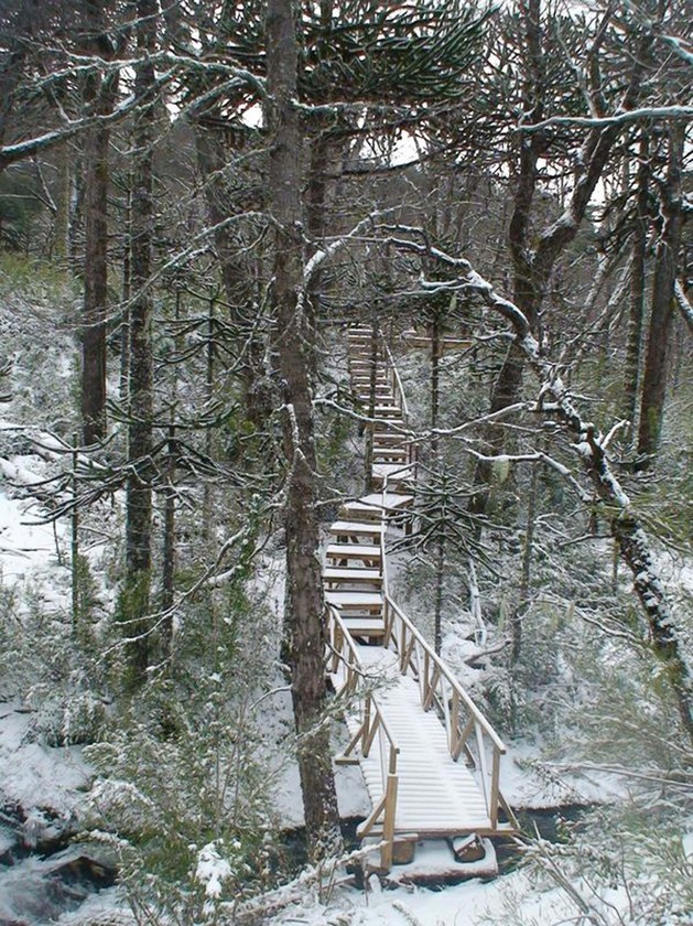 winter-cabin-accessed-elevated-walkway-3-wood-path.jpg