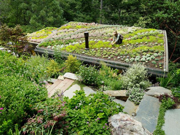 artist-studio-overlooks-guest-cabin-rooftop-garden-5-roof-garden.jpg