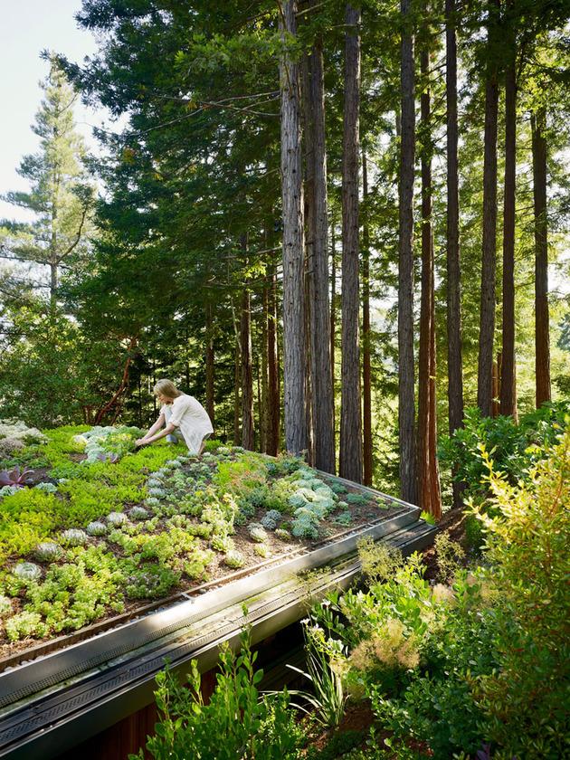 artist-studio-overlooks-guest-cabin-rooftop-garden-6-roof-garden.jpg