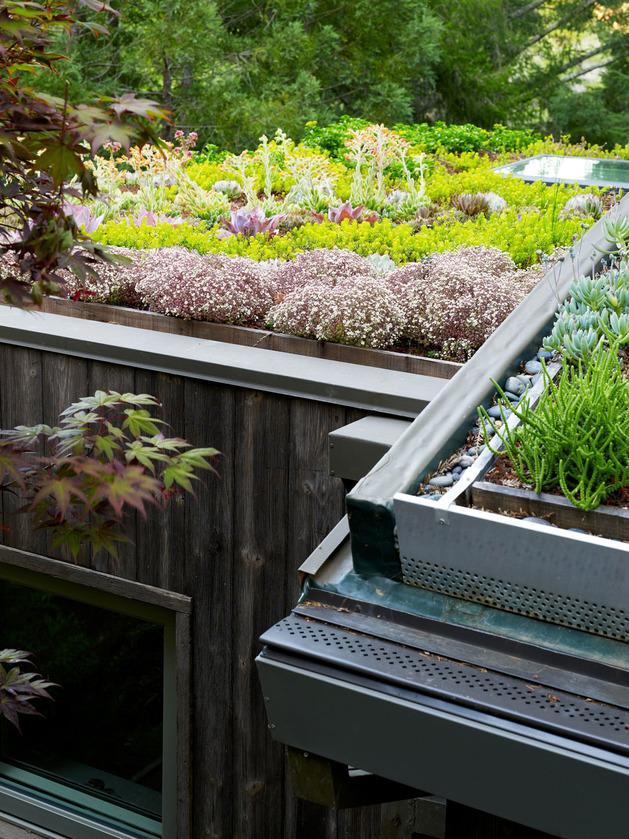 artist-studio-overlooks-guest-cabin-rooftop-garden-7-roof-garden.jpg