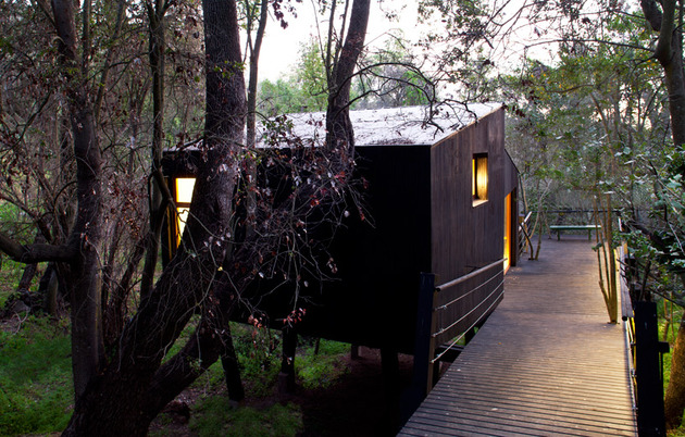 elevated-walkway-punctured-trees-forest-cabin-4-entry.jpg