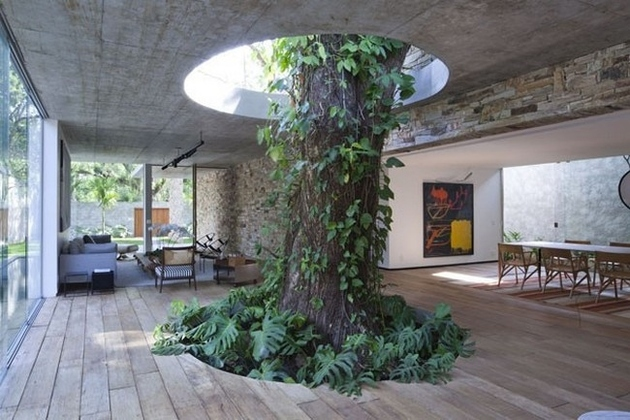 house-built-around-a-tree-1.jpg