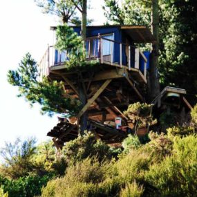 Green Tree House Built On A Budget