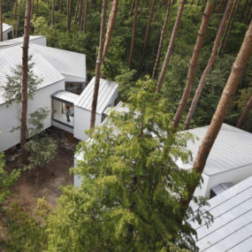 Twisted house plan wraps around trees