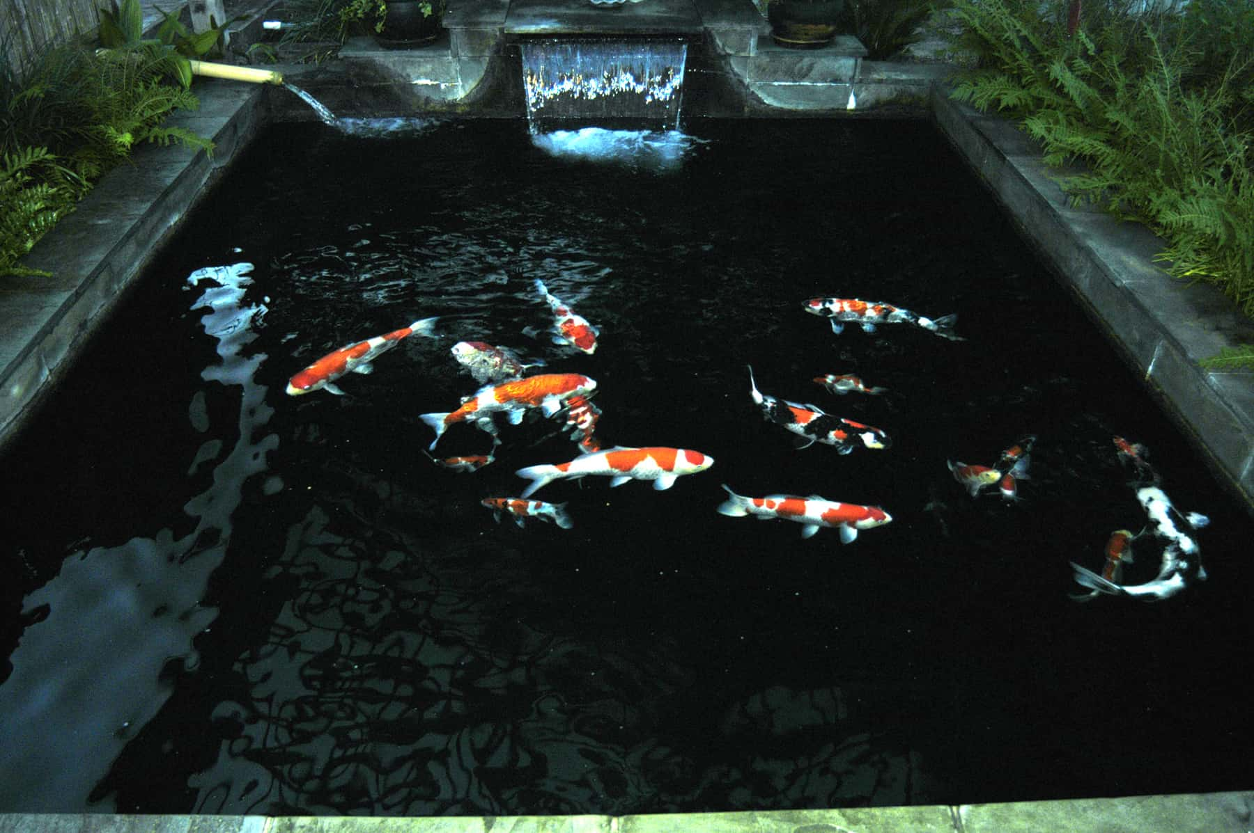 35 sublime koi pond designs and water garden ideas for for Bassin de jardin rectangulaire