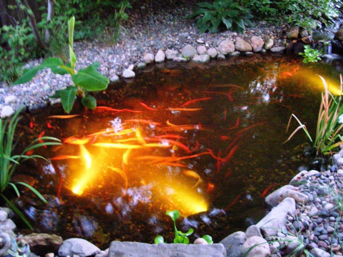35 Sublime Koi Pond Designs and Water Garden Ideas for ... on Koi Ponds Ideas id=69935